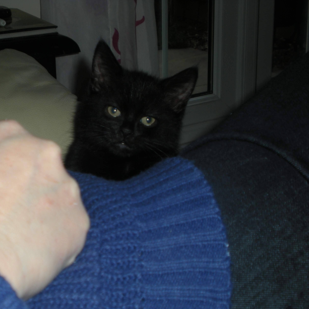 Baby Sooty