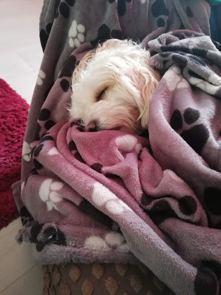 Daisy Wrapped in a Blanket