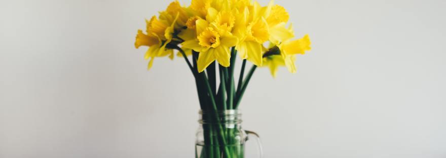 Daffodils on Bench