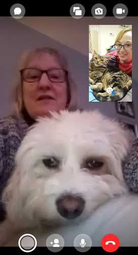 Screenshot from my phone of Facetime with my Mum and Daisy. Daisy is on my Mum's lap looking grumpily into the camera. In the smaller screen, I'm sat with Tilly, who is looking into the camera with me.