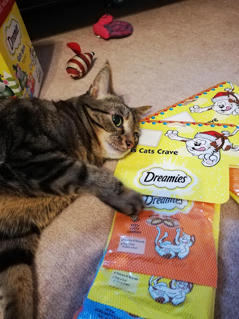 Tilly and Her Dreamies