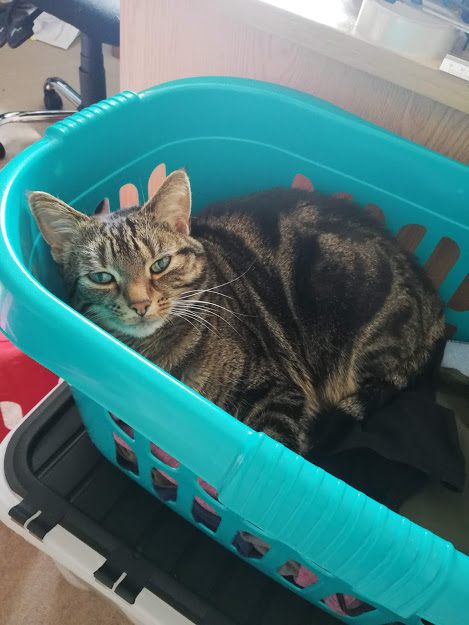 Tilly in the Washing Basket