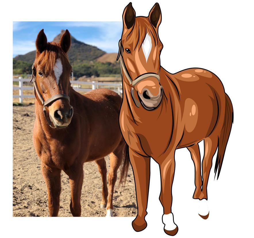 VectorPets Horse