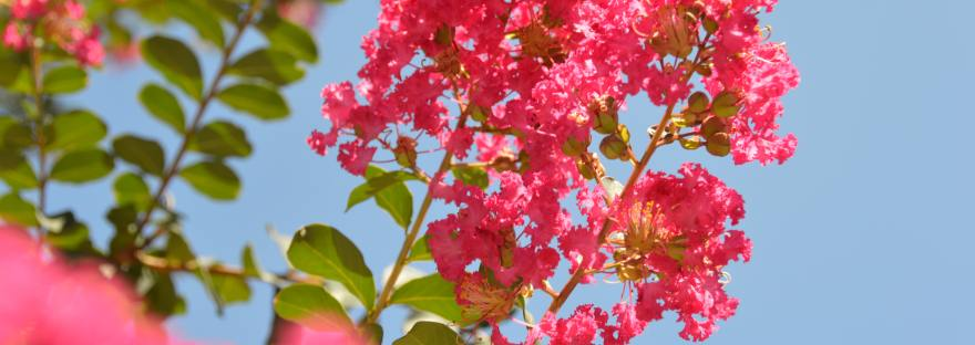 Pink Flowers and Blue Background