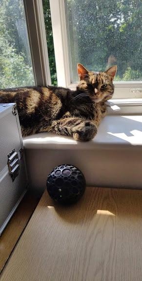Sunbathing Tilly