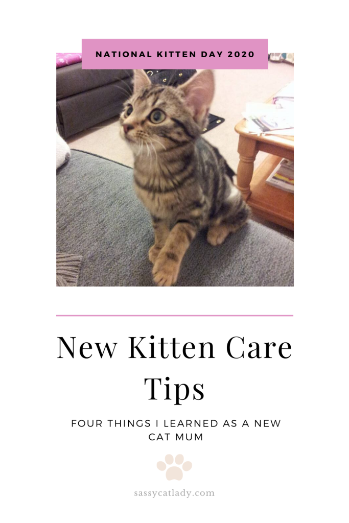 New Kitten Care Tips