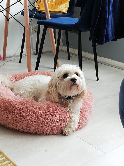 Daisy all cosy in her bed