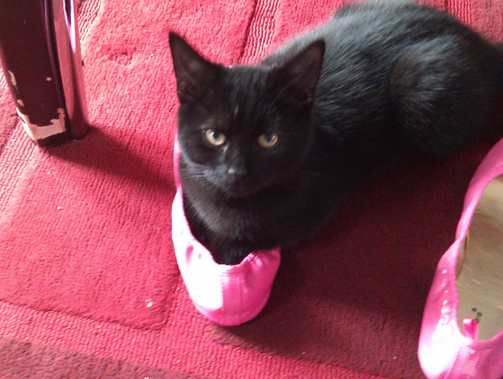 Photo of Sooty as kitten, lying in one of my pink ballet pumps. He's looking up at the camera.