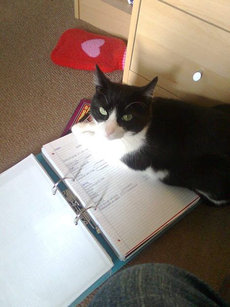 Photo of Ozzy lying on top of my folder which is filled with my A-level work. He's looking directly at the camera as though I'm the one disturbing him!