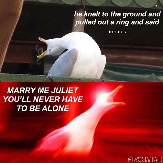Inhaling seagull meme with Love Story lyrics applied.