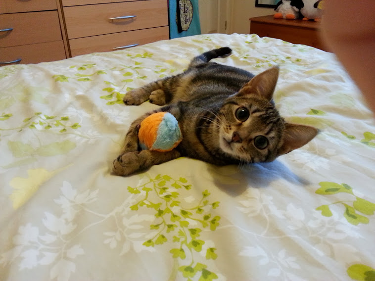 Tilly (around 6 months old) lying on the bed playing with her catnip fish.